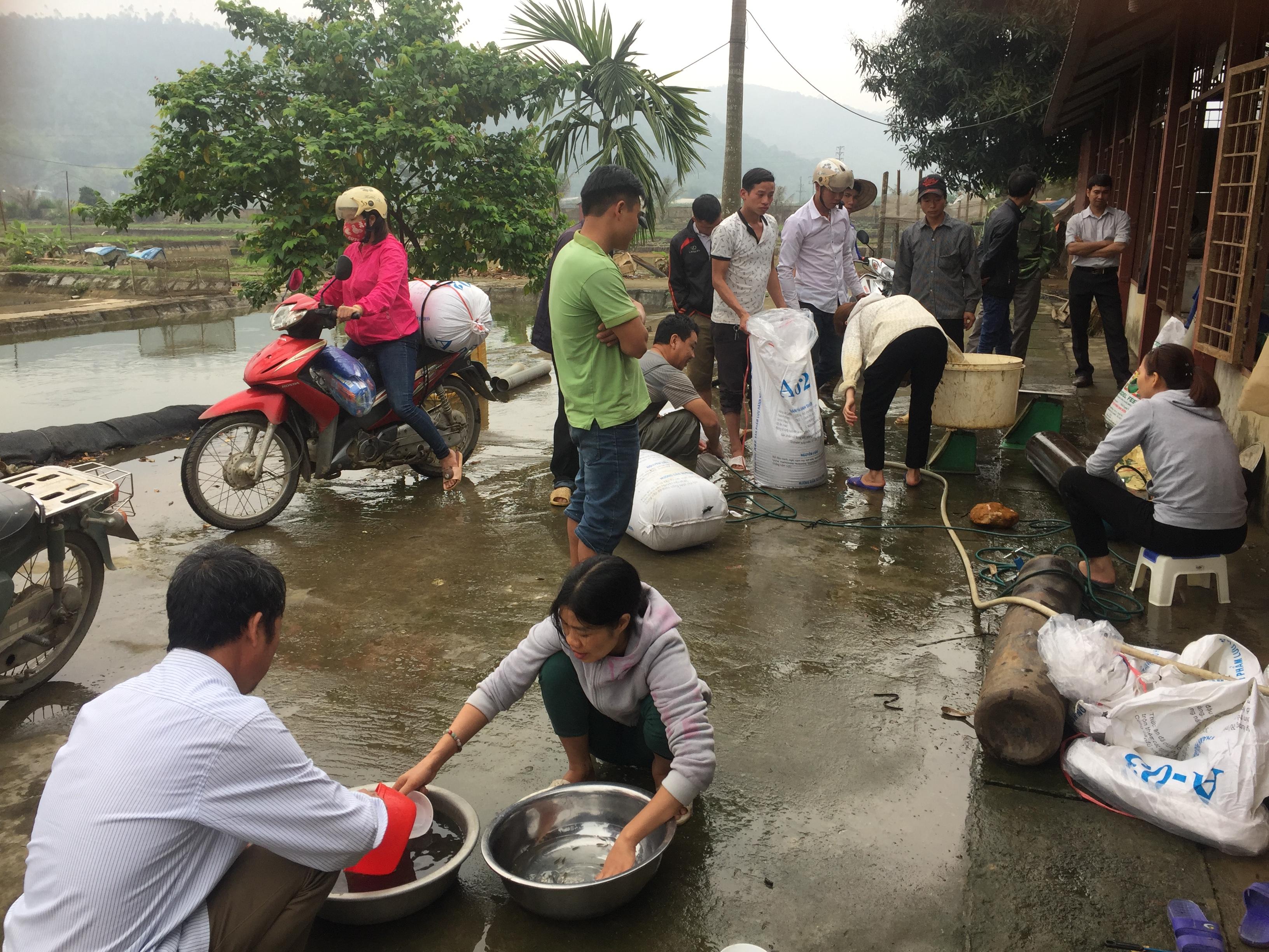Trung tâm giống Nông nghiệp Lào Cai chủ động trong công tác sản xuất và cung ứng giống thủy sản trong tỉnh và ngoài tỉnh.